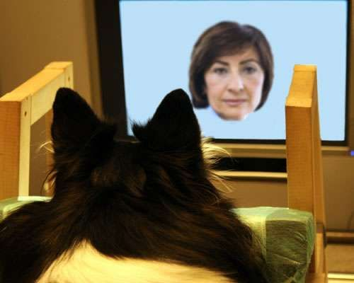 Dogs recognize familiar faces from images