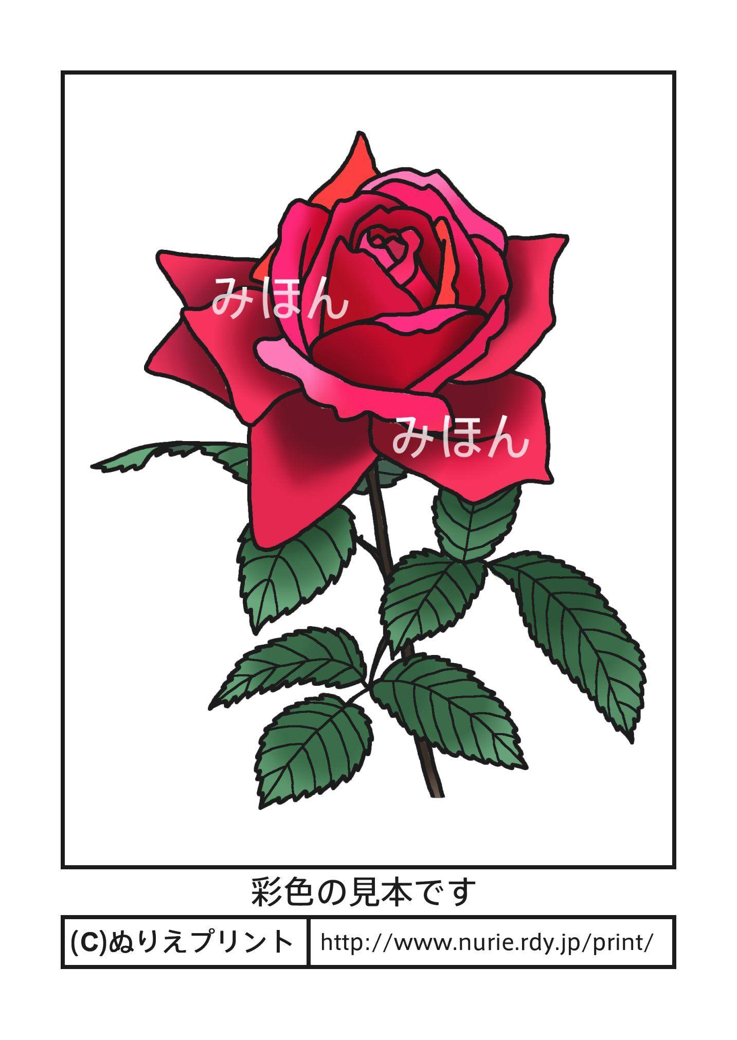 バラ・薔薇(彩色見本)/茨城県の花/無料塗り絵/都道府県【ぬりえプリント ...