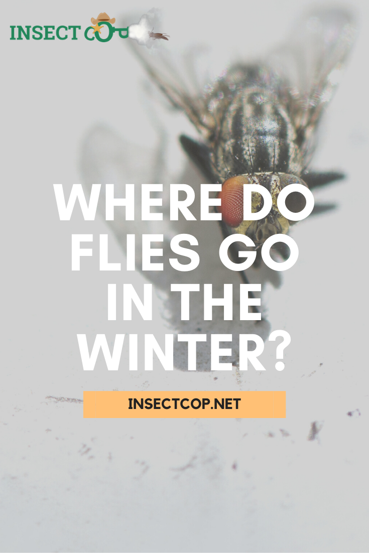 Where Do Flies Go In The Winter Insect Cop Pest Facts Insect Photography Funny Questions