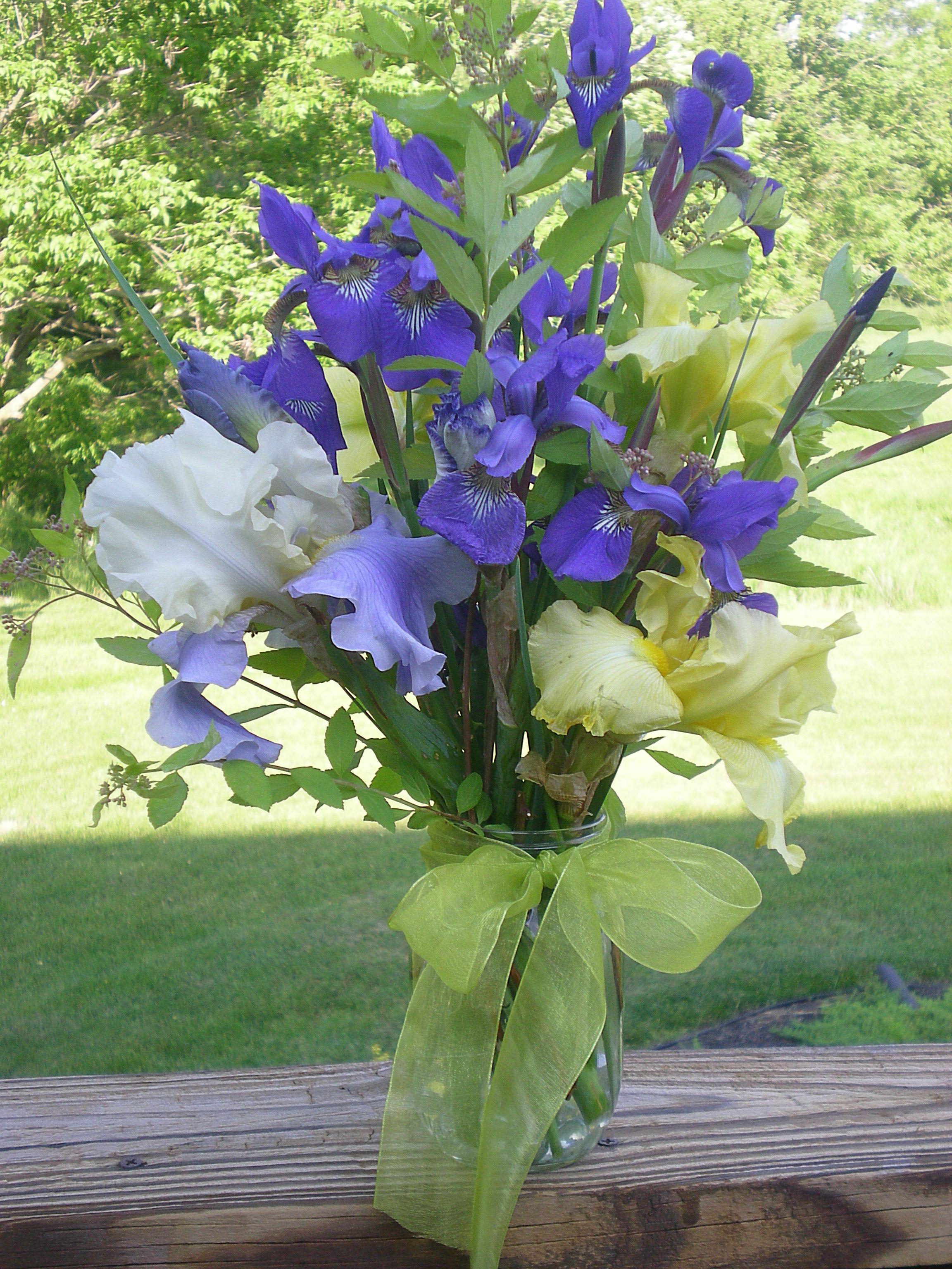 Flowers (yellow & white bearded iris & siberian iris with