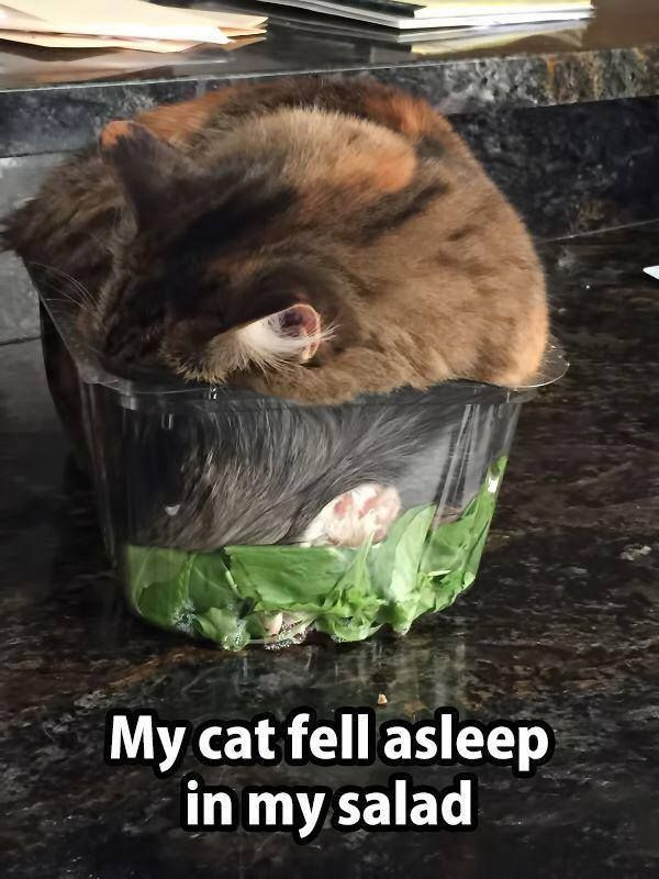 My Cat Fell Asleep In My Salad Cool Food Bowls Funny Animal Pictures Funny Cats Funny Animals