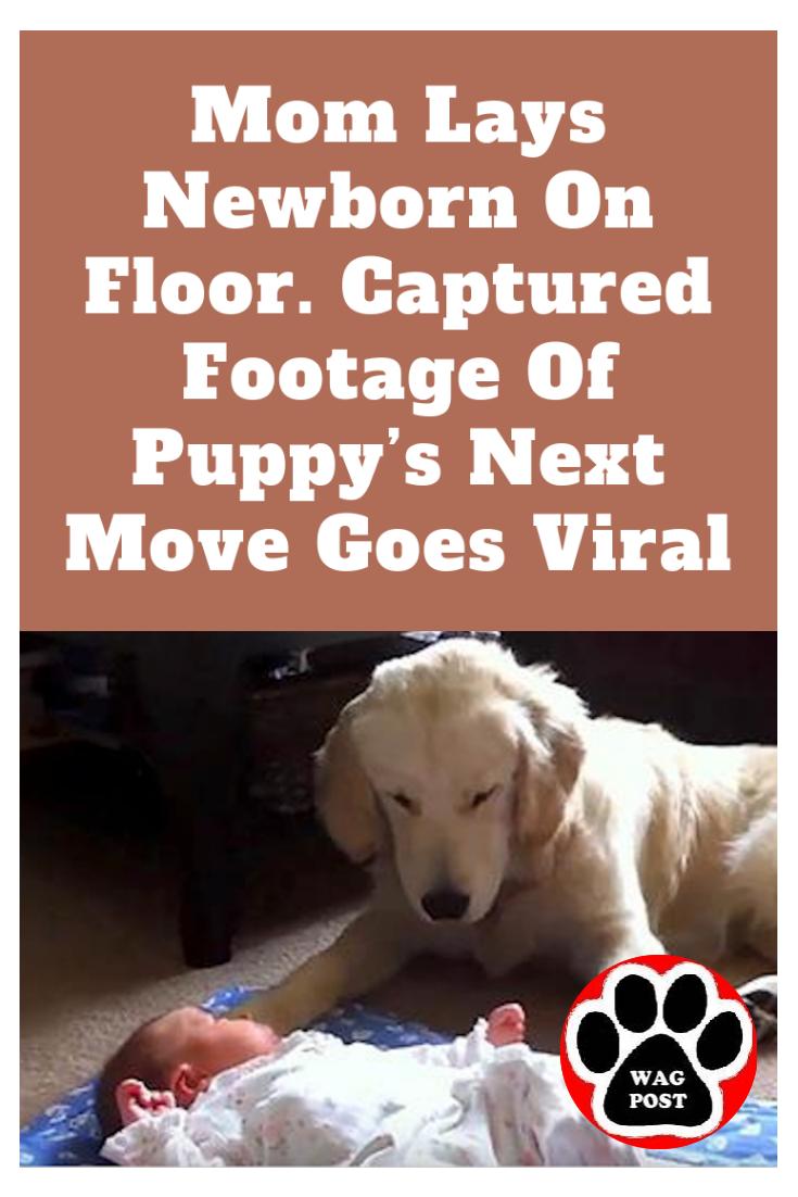 Mom Lays Newborn On Floor Captured Footage Of Puppy S Next Move
