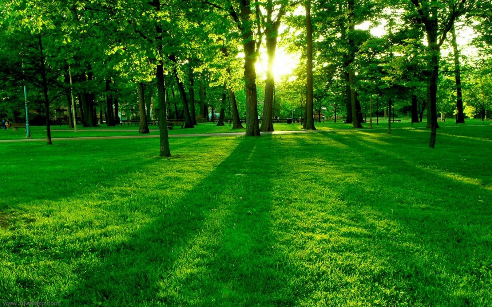 Green Nature Wallpapers Free For Desktop Backgrounds Green Nature Nature Wallpaper Green Paintings