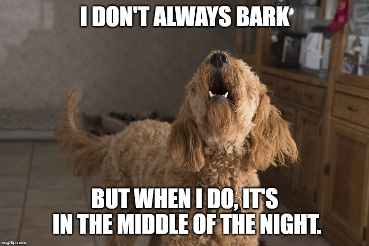 Does Your Dog Bark In The Middle Of The Night Too How To Control His Midnight Barking Funnydogbarking Dogbark With Images Dog Body Language Dog Barking Biking With Dog