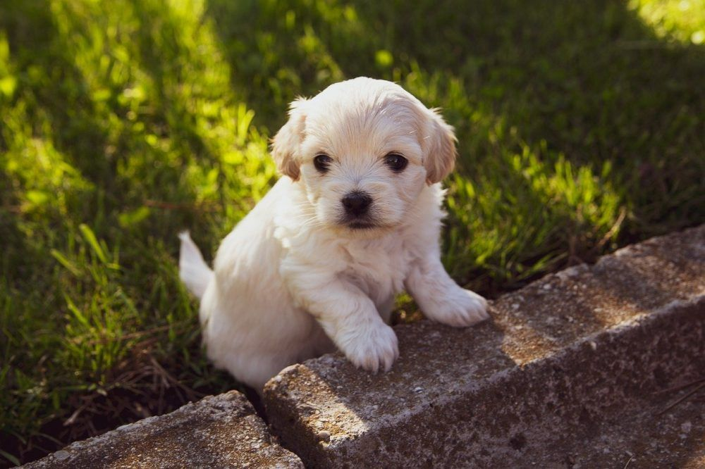 Just Look That S Outstanding In 2020 With Images Animals Pup Labrador Retriever