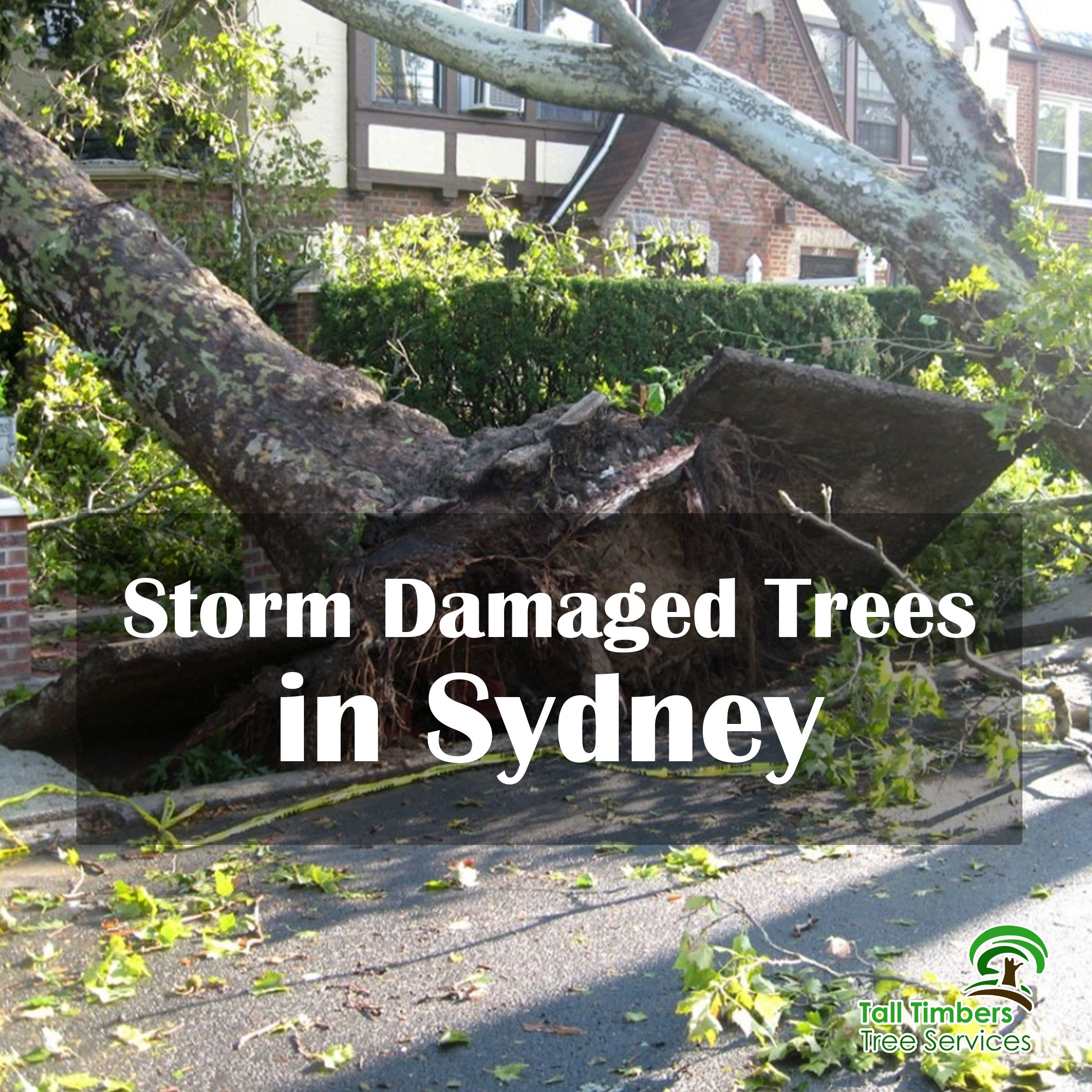 Storms Are Often Unforeseeable We Can Have Sunshine One Day And Thunderstorms The Next They Cause Damage To Trees Which In Turn Become Really
