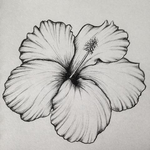 11376441 1642544449291875 520332571 N Jpg 480 480 Easy Flower Drawings Drawings Flower Drawing