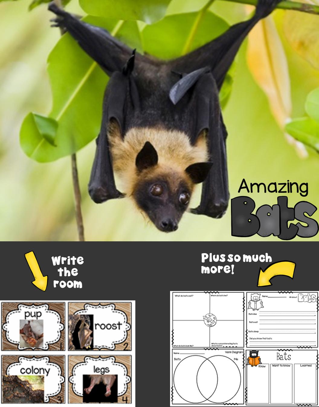 All About Bats Unit Study