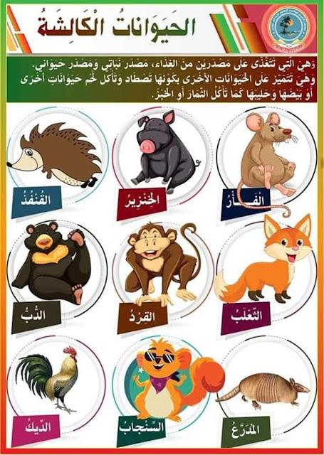 التغذية عند الحيوانات الحيوانات العاشبة الحيوانات اللاحمة الحيوانات الكالشة بحوث مدرسية Arabic Kids Learning Arabic Arabic Language