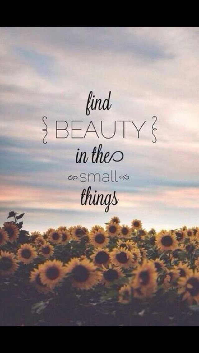 Find Beauty In The Small Things X Photo Edit Quotes