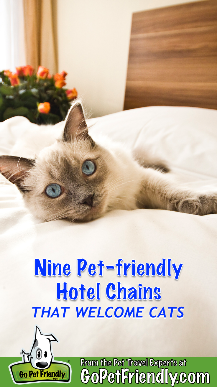 Nine Cat Friendly Hotel Chains Where Felines Are