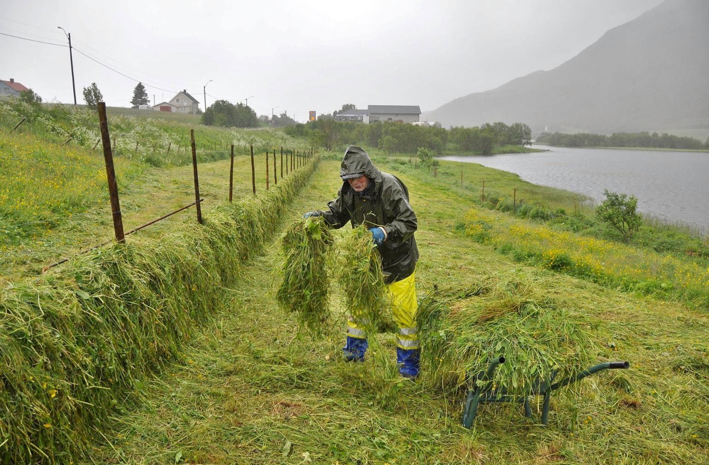 Jarle «Bror» Larsen er i full gang med med å hesje gress på Straume i Bø, i øsende rengvær 6. juli 2016. – Dette er i ferd med å bli glemt kunskap, sier Larsen. Foto: Bjørnar Hansen