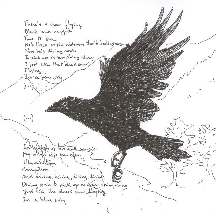 crow flying google search