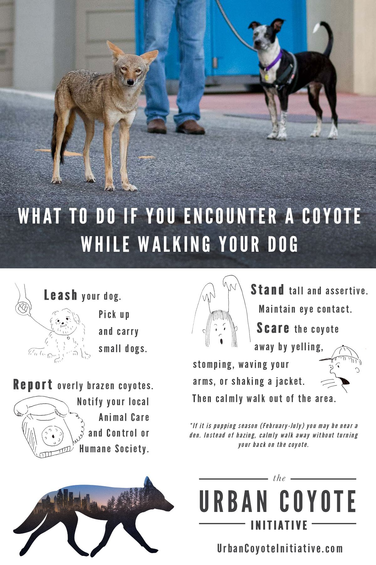 What To Do If You Encounter A Coyote While Walking Your Dog Urban Coyote Initiative Llc Dog Safety Your Dog Coyote