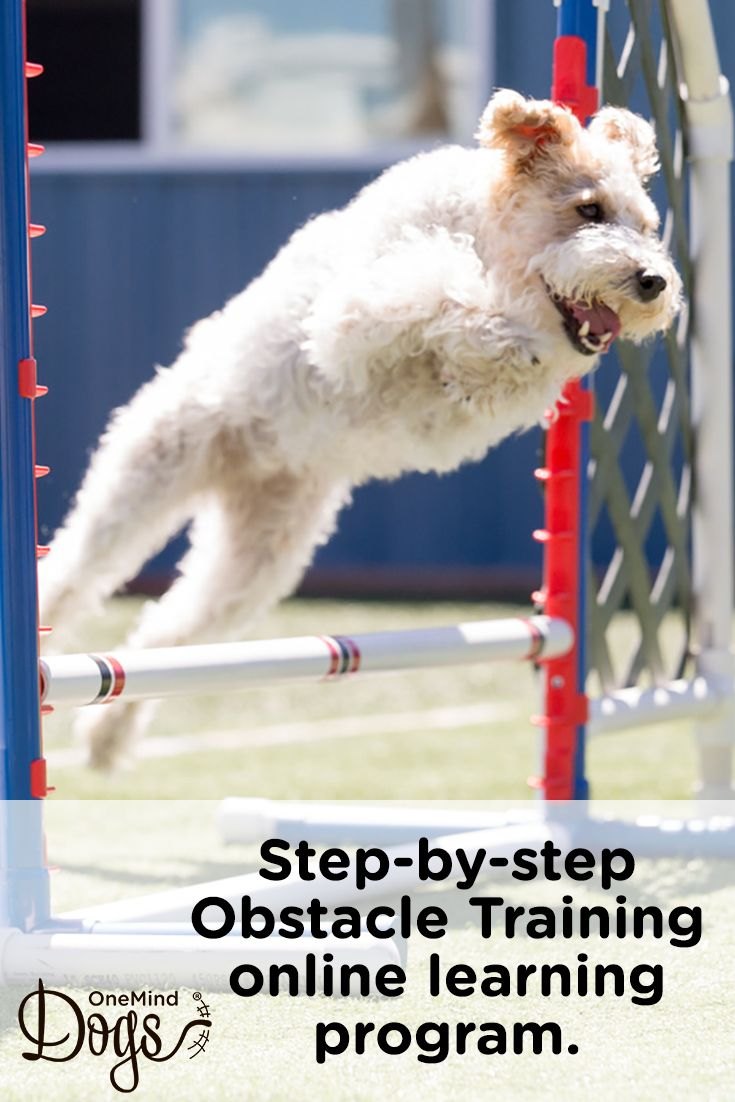 To Make It Easier To Teach Obstacles To Your Dog Onemind Dogs Is