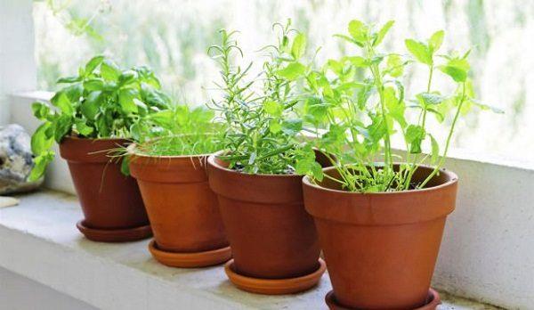 7 Tips for a Fresh Herb Garden in your City Apartment | Herbs garden ...