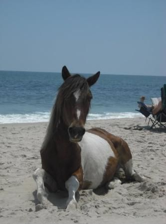 Wild Horses Still Roam On Ateague Island Near Virginia One Of Travel And Leisure S Best Family Getaways Road Trip Spots Pinterest
