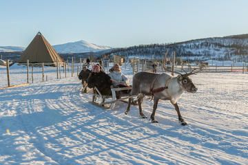 Reindeer Sledding, Feeding, and Sami Culture Tour from Tromso - TripAdvisor