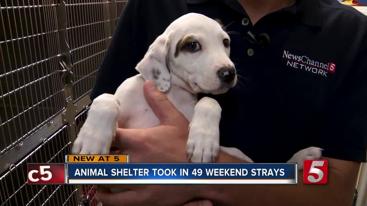 """Situation """"frustrating"""" as Clarksville animal shelter"""