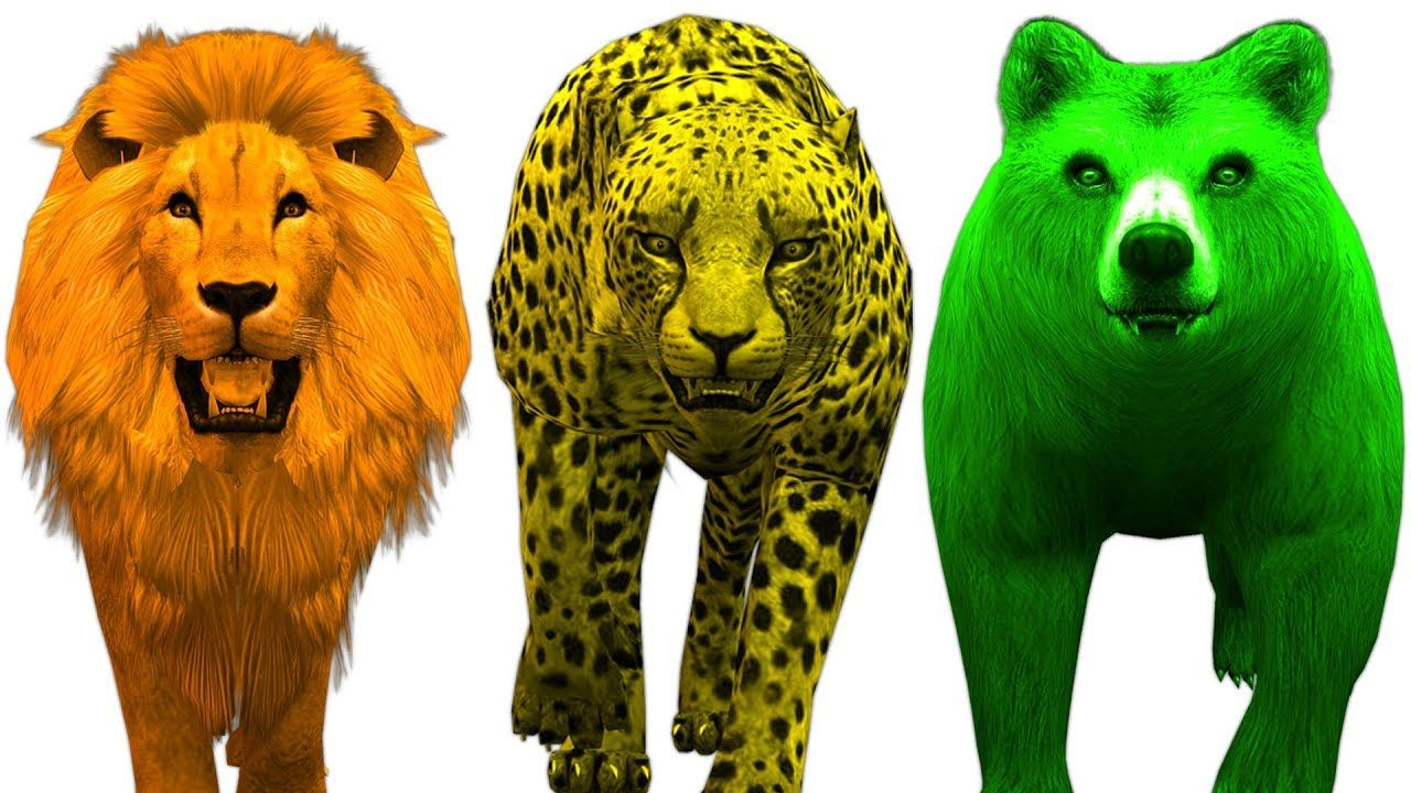 Learn Colours For Kids With Wild Animals Colors Preschool Nursery ...
