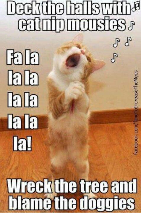 fa la la la la la la singing christmas cat funny - Animals Singing Christmas Songs