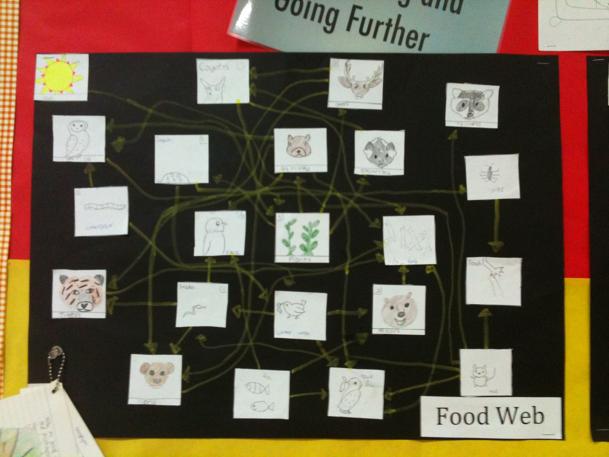 temperate forest food web diagram half switched outlet wiring deciduous ecosystem chain foodfash co
