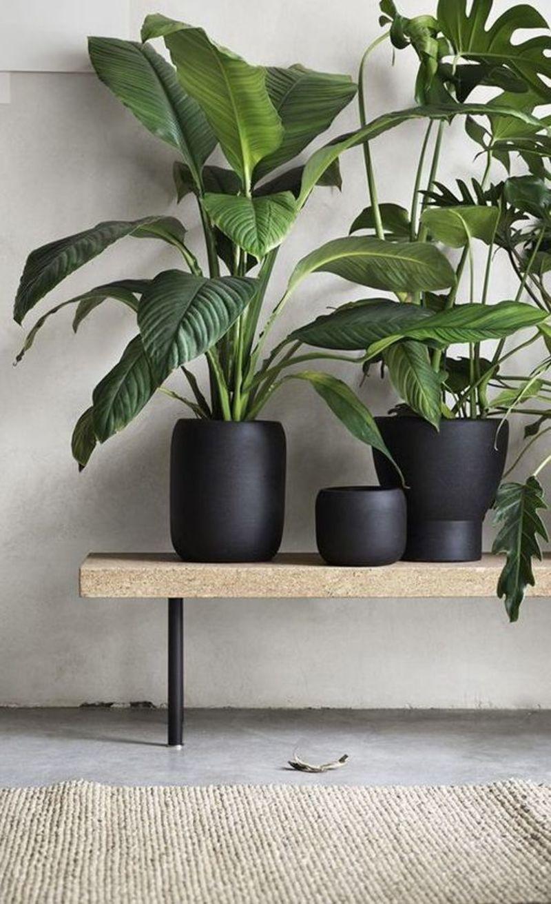 black flower pots indoor