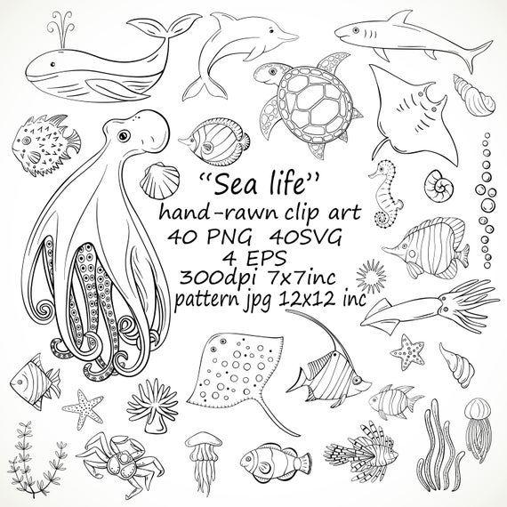 Hand Drawn Sea Life Clipart Svg Sea Animals Clipart Png Ocean Life Doodle Sea Life Marine Underwater Life Clipart Sea Life Clipart Sea Animals Drawings Sea Life