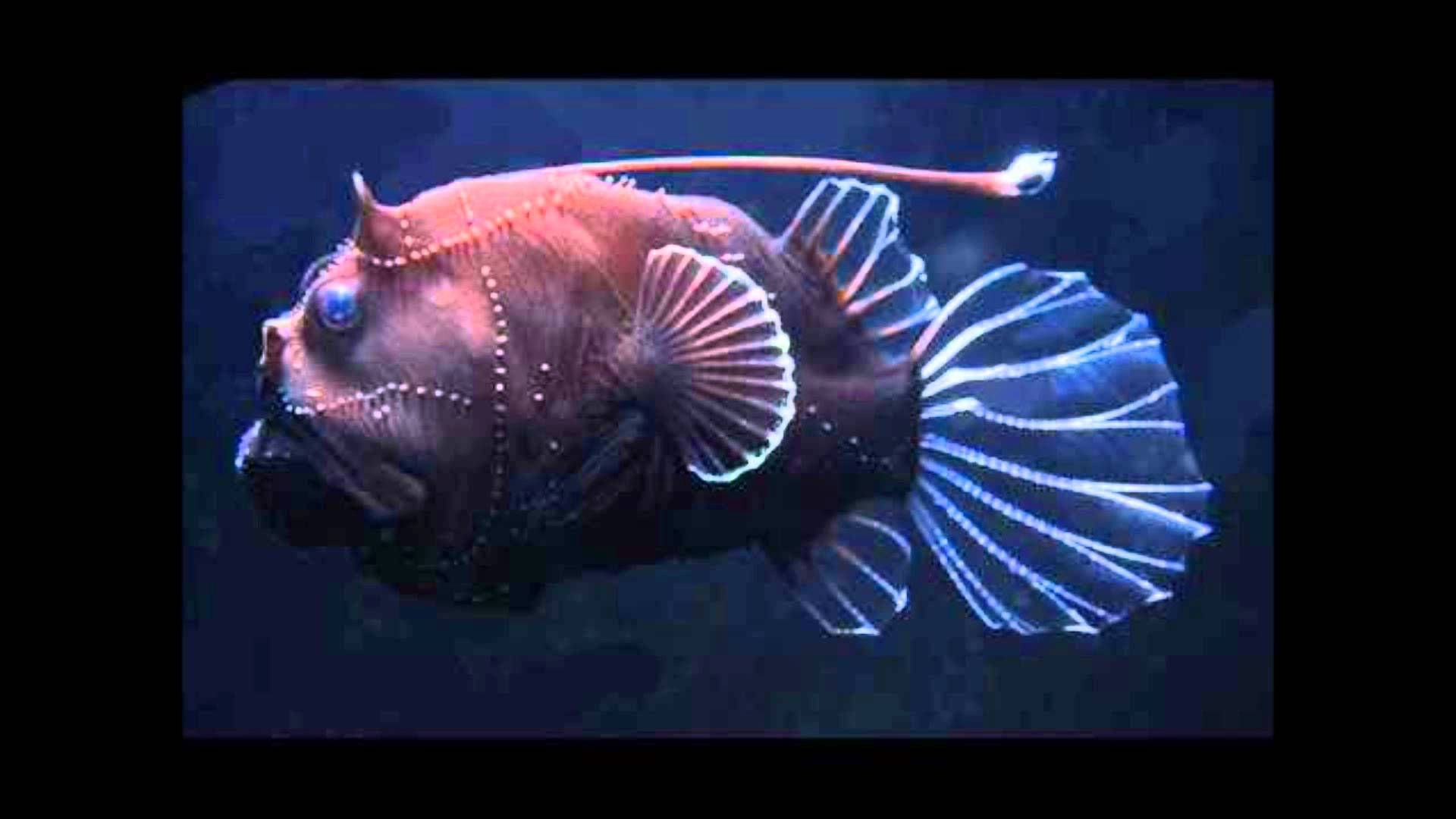 Deep Ocean Creatures Strangely Beautiful Deep Sea Creatures Youtube Beautiful Sea Creatures Deep Sea Creatures Sea Fish