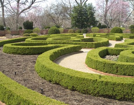Cut Boxwoods with Care  - CountryLiving.com