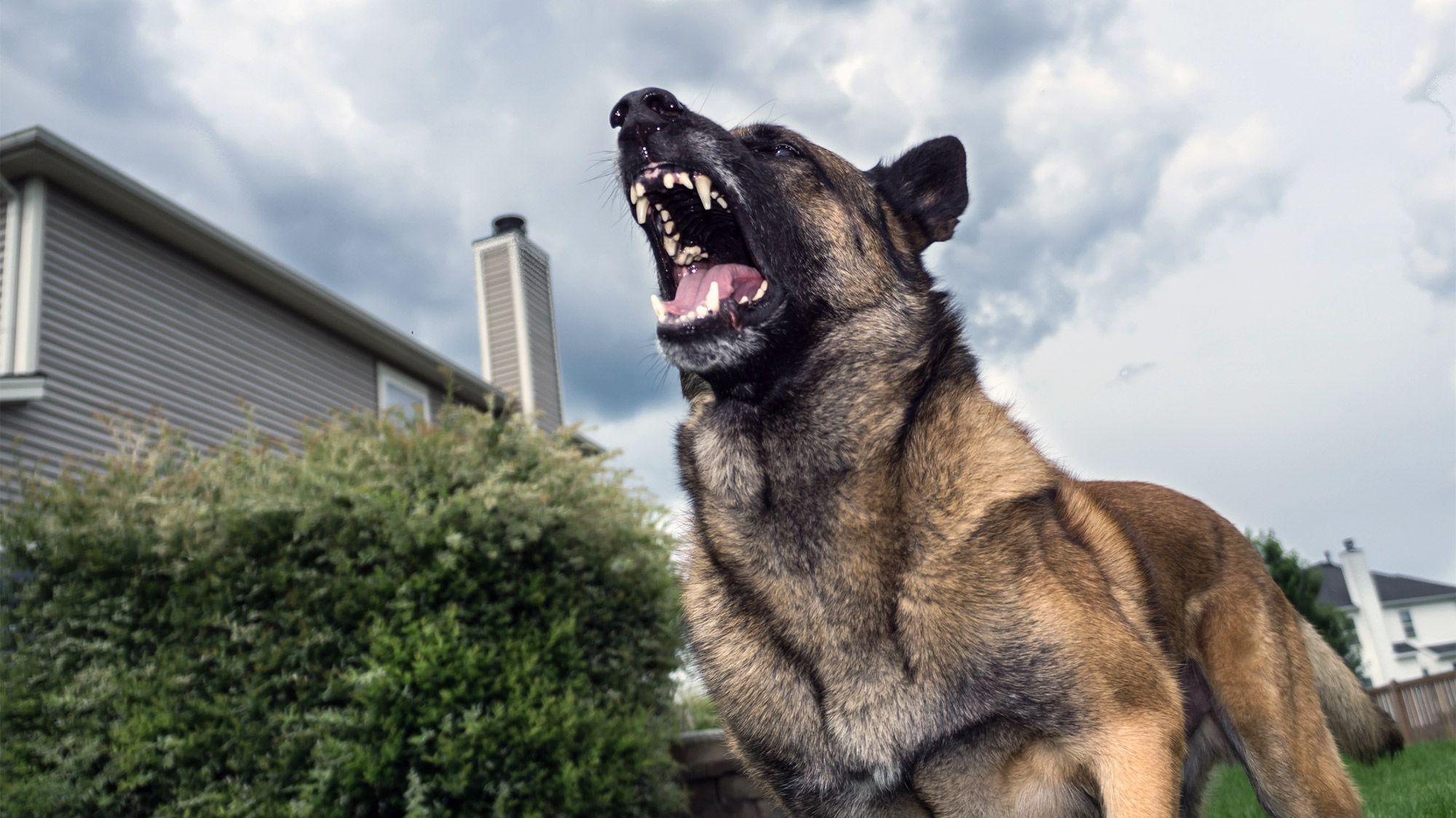How to stop a dog from barking and driving you bonkers
