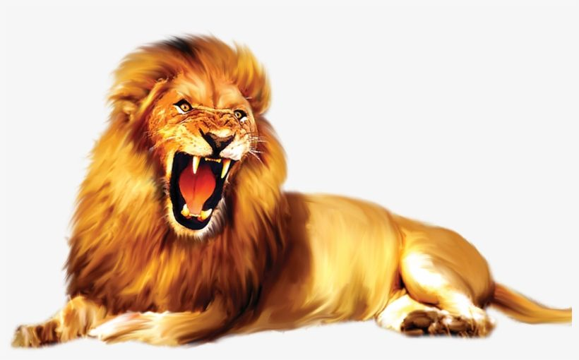 Download Lion Png Images Masai Lion Png Image For Free Search More High Quality Free Transparent Png Images On Pngkey Com And S Lion Cartoon Lion Png Images