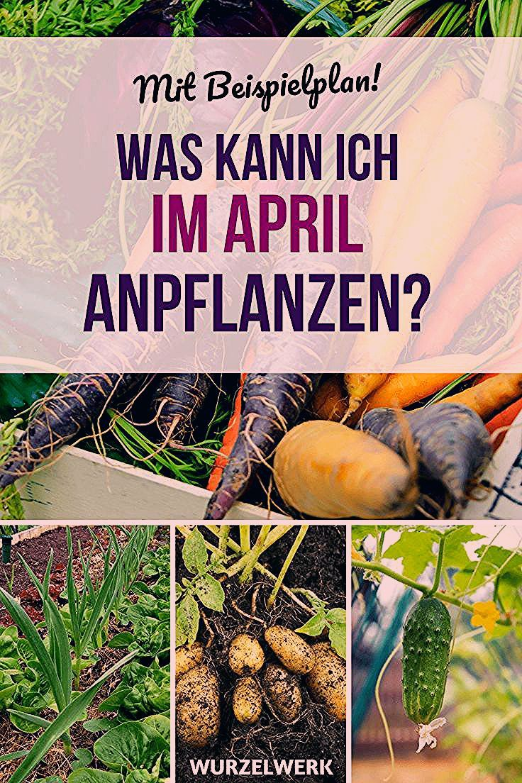 Photo of Aussaat & Pflanzen im April + Gemüsegarten-Pflanzplan – Wurzelwerk