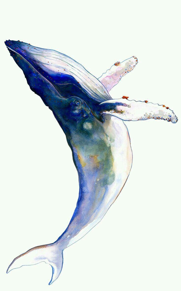 Bildergebnis Fur Wal Aquarell Wasserfarben Illustration