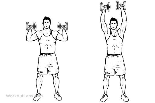 Pin on Chest, Shoulders, Triceps