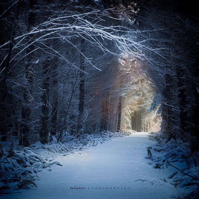 Forest in snow by Steve Deligan