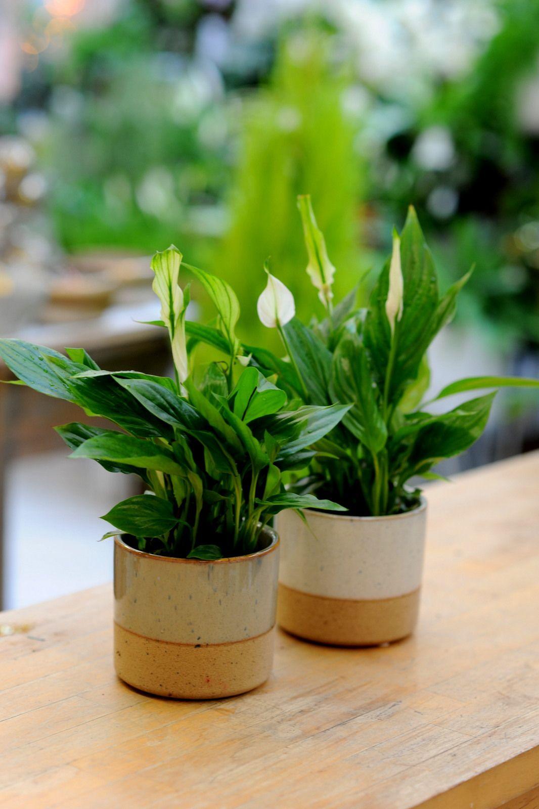 Kwiaty Nasa Ogrod Lobzow Plants Herbs Houseplants