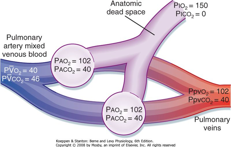 what is the partial pressure of oxygen in arterial blood