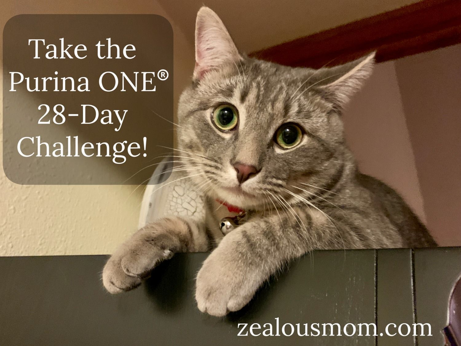 Pamper Your Kitty With Purina One Purinaonevisibledifferences Purina Cat Mom Owning A Cat