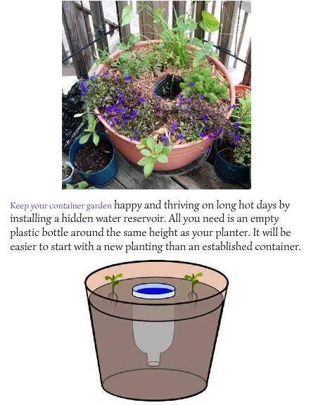 self watering containers   Self Watering Container garden