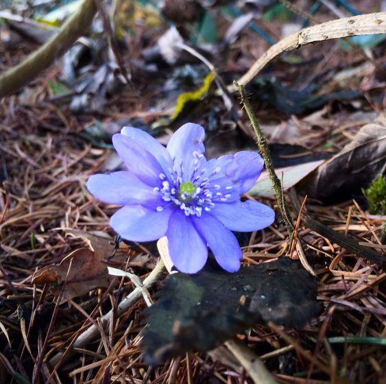 In Oberosterreichs Garten Bluht Der Fruhling Plants Flowers Garden