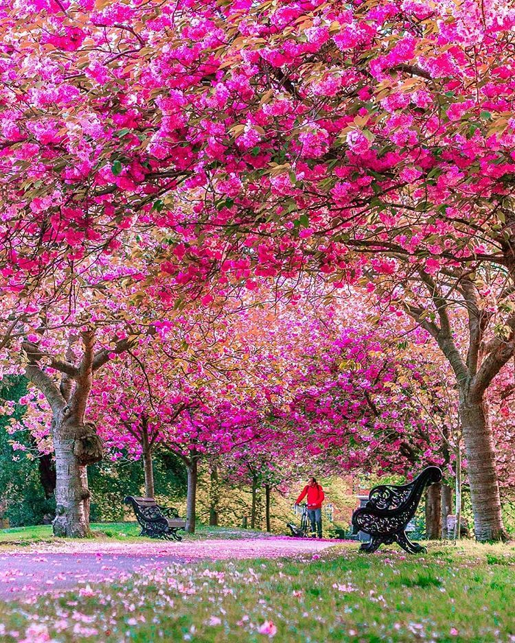 Greenwich Park London United Kingdom Beautiful Gardens Spring Photography Beautiful Landscapes