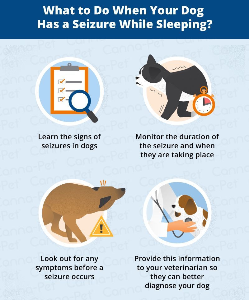 Why Do Dogs Have Seizures While Sleeping Dog Seizures Epilepsy