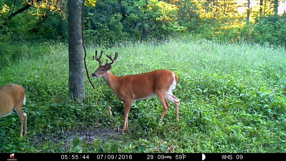 Which Direction Do Your Food Plots Point? | Food plots | Deer