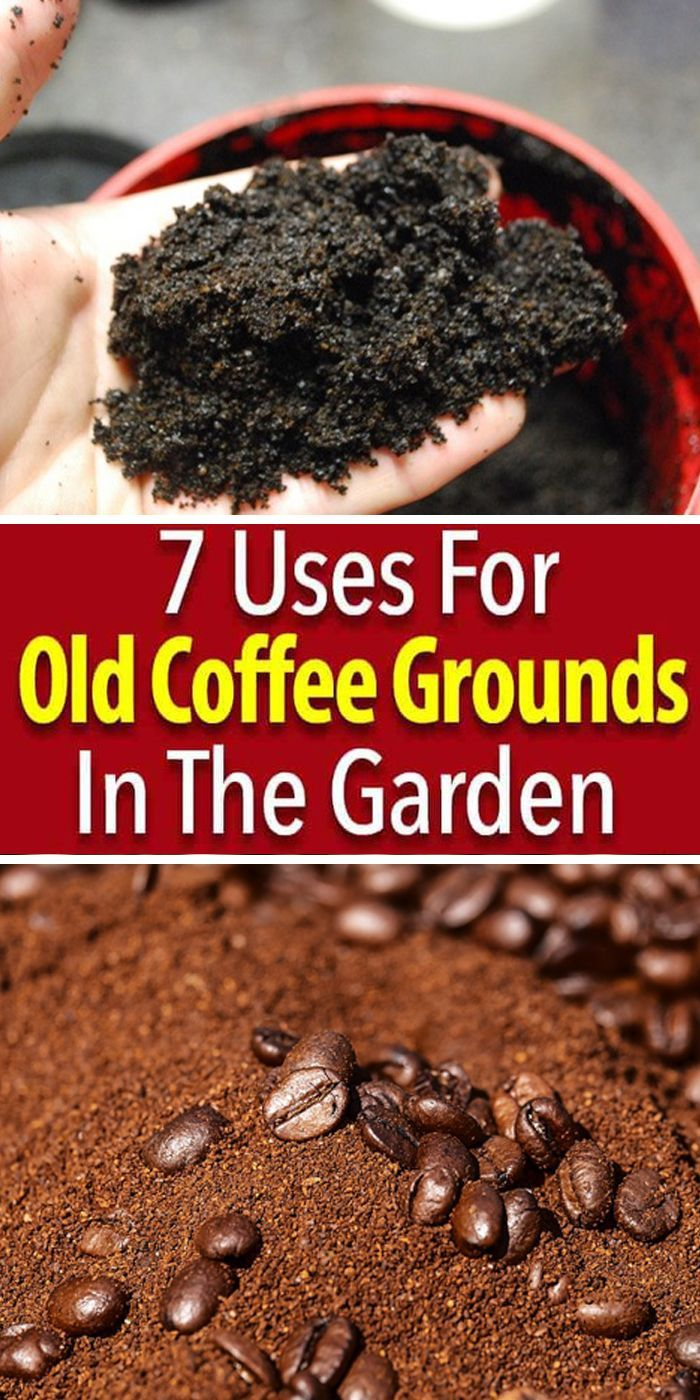 How To Use Coffee Grounds In The Garden 7 Ways Coffee Grounds