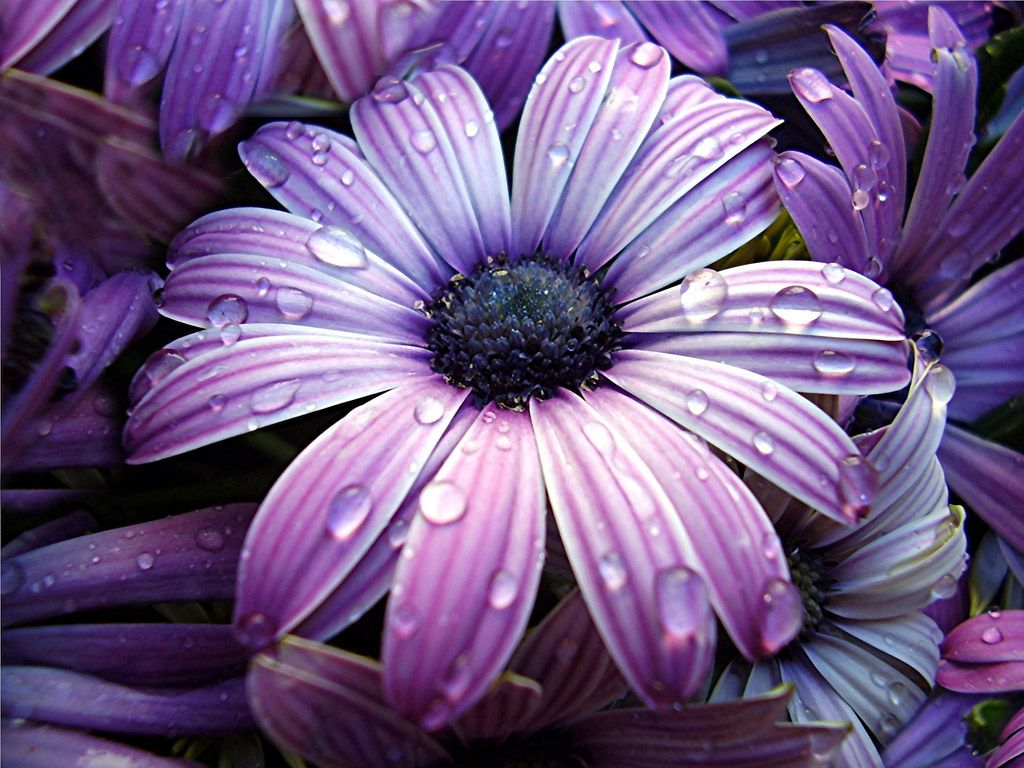 Not Sure What This Is But Its Very Pretty Flora Pinterest