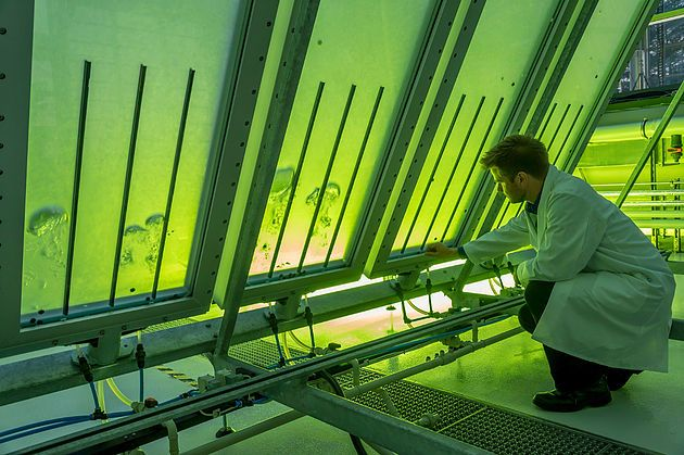 Airbus Turn Algae into Biofuel for Planes - GineersNow