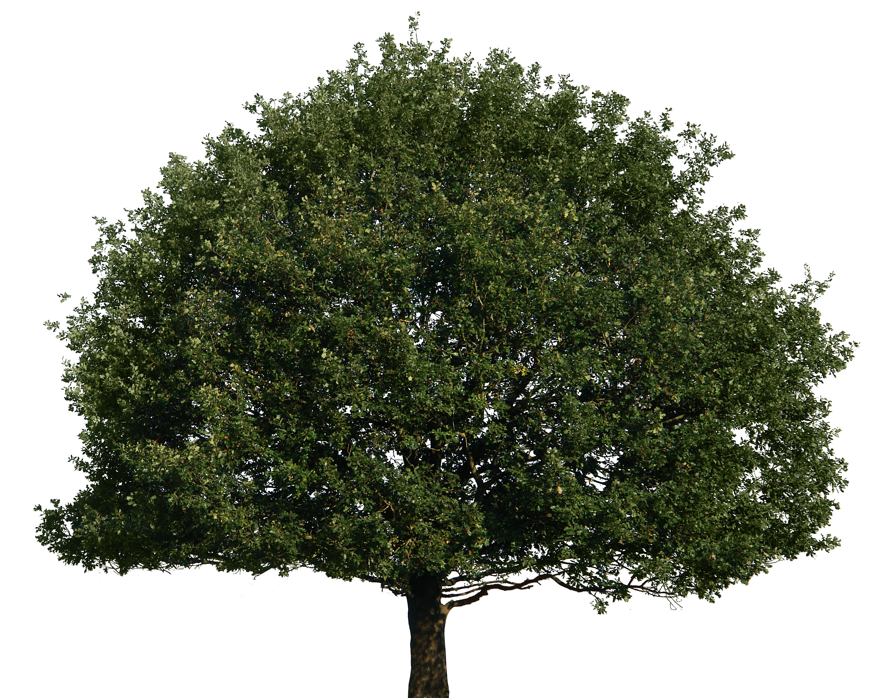 Tree 51 Png By Gd08 D4b2n6f Png 2820 215 2238 Pngs Pinterest