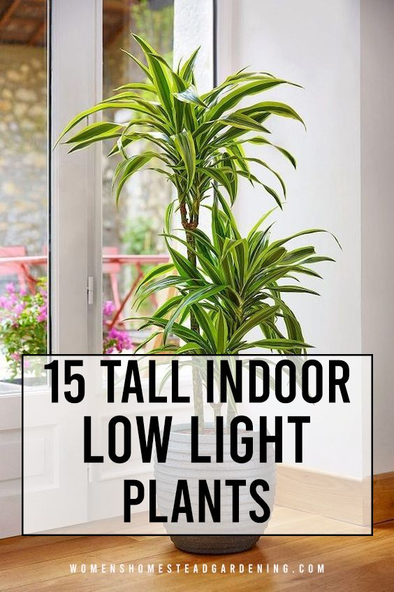 15 Tall Indoor Low Light Plants In 2020 With Images 400 x 300