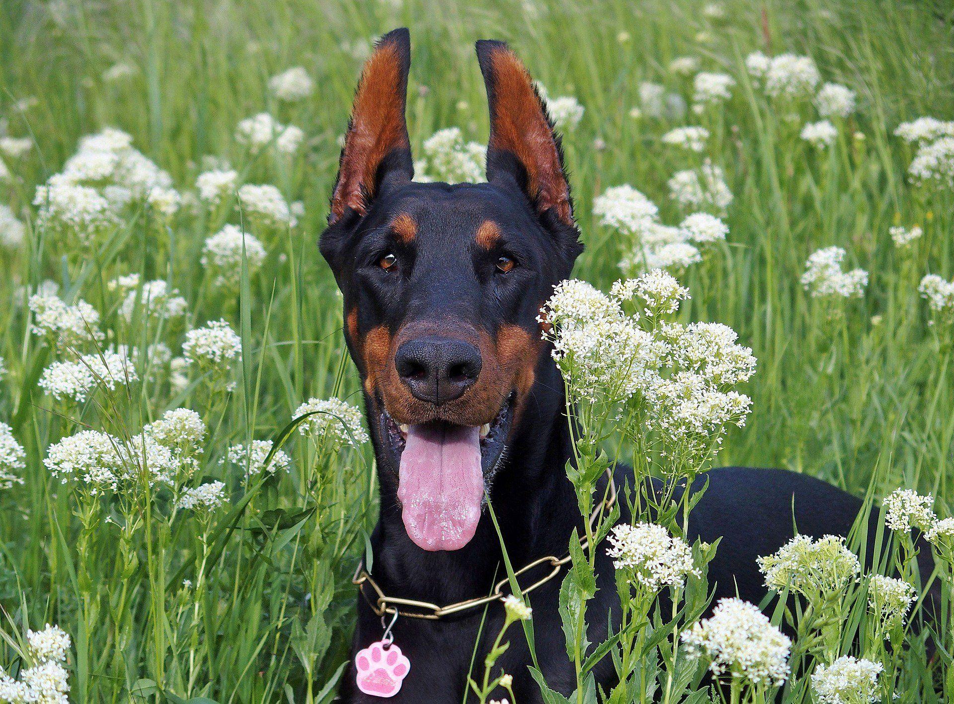 31 Great Female Dog Names Fun Ideas Female Dog Names Cool